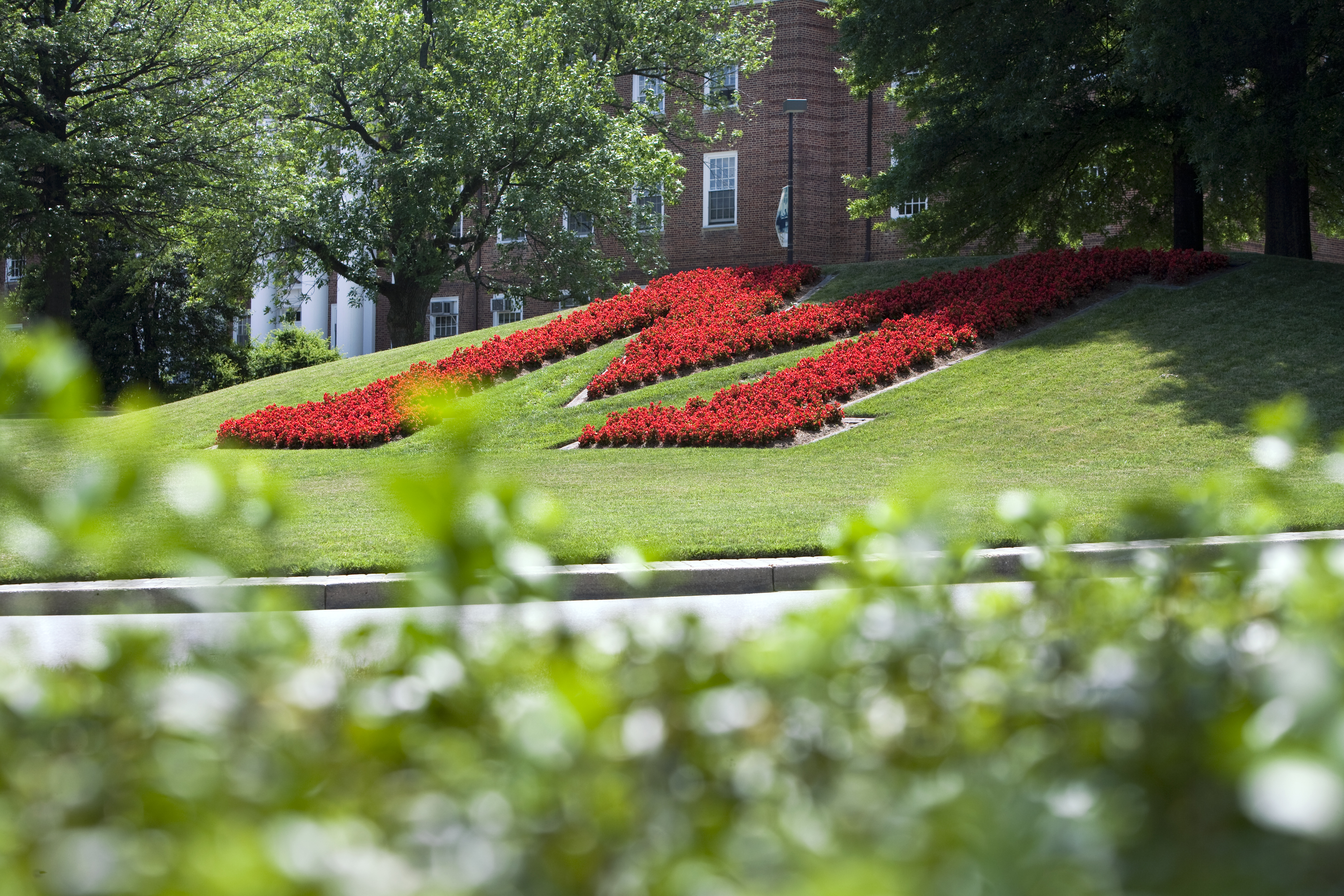Red M Composed of Flowers in UMD Campus Driving Circle
